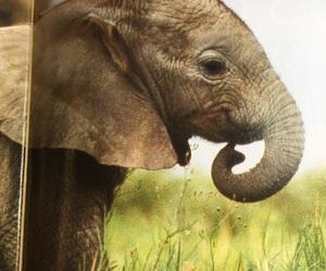 animal, olifant, and cute image