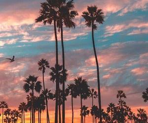 beautiful, cloud, and palms image