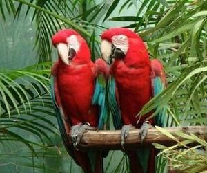 animals, birds, and jungle image