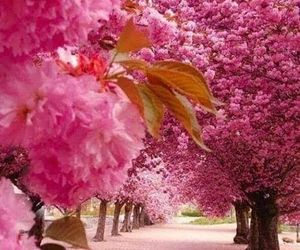 aesthetic, blooms, and trees image