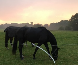 beauty, black, and gras image
