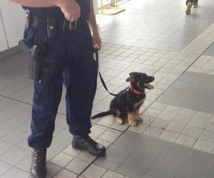 dog, police, and puppy image