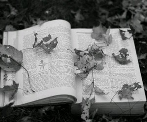 black and white, book, and autumn image