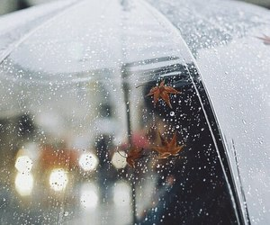 rain, autumn, and umbrella image