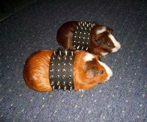 guinea pigs, hardcore, and metal image
