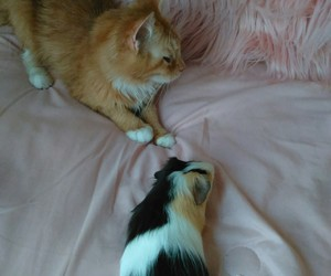 aesthetic, guinea pig, and kitten image