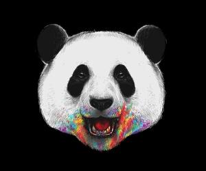 panda, colors, and rainbow image