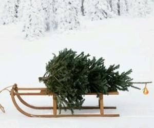 snow, christmas, and christmas tree image