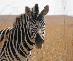 animals, nature, and south africa image