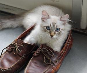 kat, catsofinstagram, and cute image