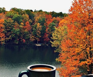 coffe, forest, and trees image