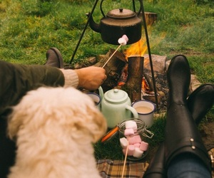 dog, autumn, and camping image
