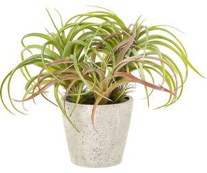 plant image