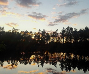 evening, forest, and summer image