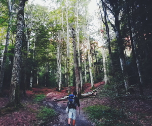 explore, forrest, and green image