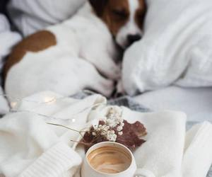 coffee, dog, and puppy image