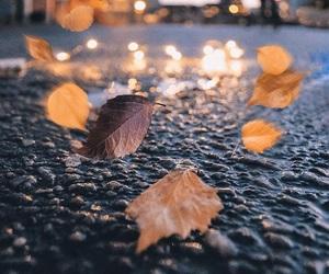 autumn, leaf, and lights image