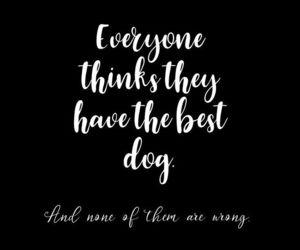 dog, quote, and dog quote image