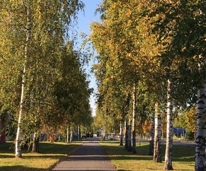 autumn, colours, and walking image