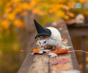 hedgehog, autumn, and Halloween image