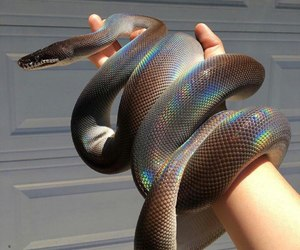 snake, animal, and rainbow image