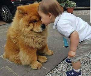 cute, child, and dog image