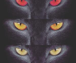 cat, eyes, and dark image