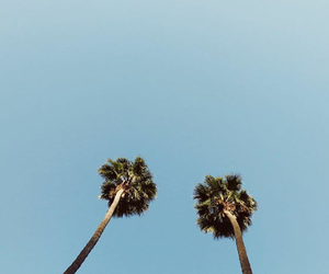 blue, california, and palms image