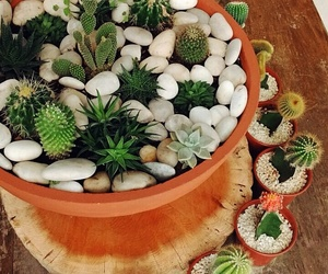 cacto, cactus, and decor image