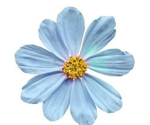 blue, flower, and stickers image