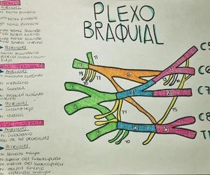 anatomia, anatomy, and doctor image