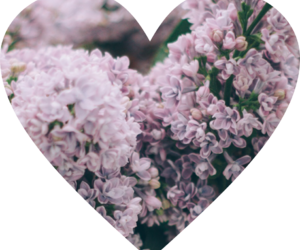 flowers, png, and love image