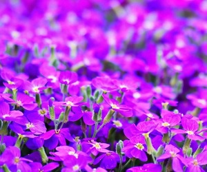 flores, purple, and wallpaper image