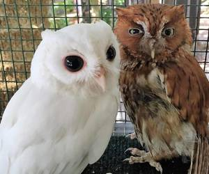 animal, owl, and cute image