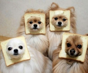 dog, cute, and bread image