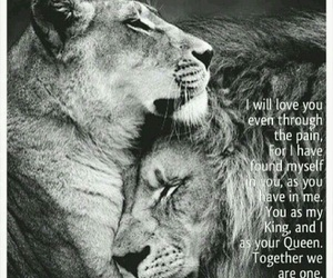 lion, quotes, and king image