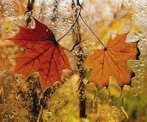 autumn and rain image