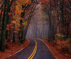 autumn, awesome, and cold image