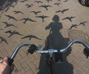 bird, photography, and bike image