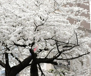 tree, white, and flowers image