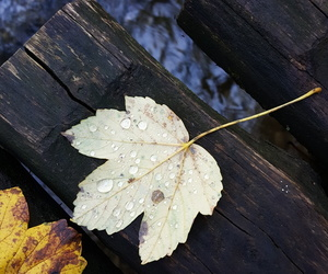 autumn, beauty, and bridge image