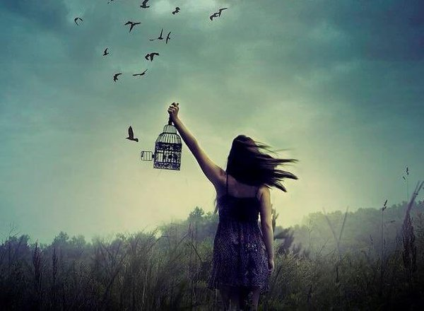 freedom and bird image