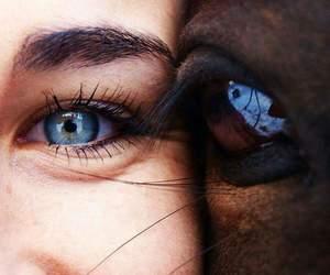 horse and eyes image