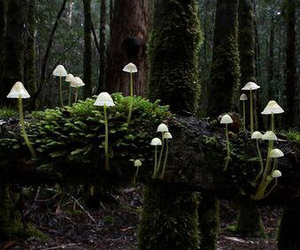 nature, mushroom, and forest image