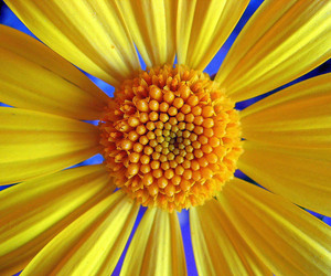 amazing pictures, photography inspiration, and flower photo image