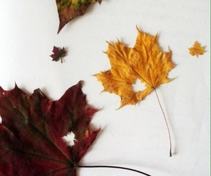 autumn, fall, and autumnal image