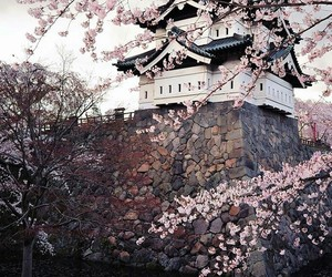 cool, sakura flowers, and japan image
