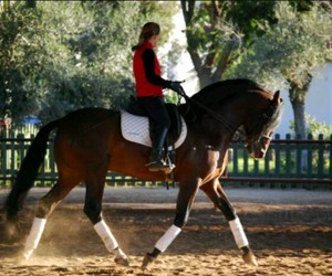 cheval, dressage, and equitation image