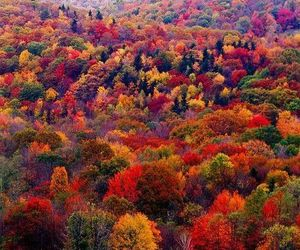 autumn, beautiful, and Best image