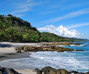beach, costa rica, and forest image